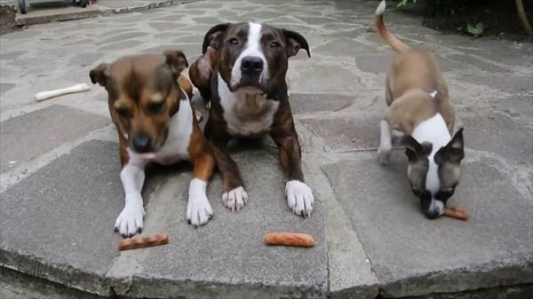 おあずけ状態の3匹の犬。よし!の合図で驚きの展開に4