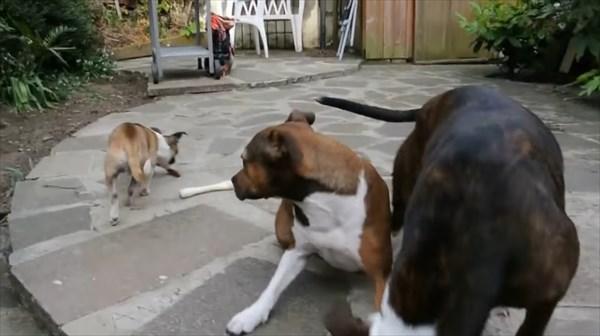 おあずけ状態の3匹の犬。よし!の合図で驚きの展開に8