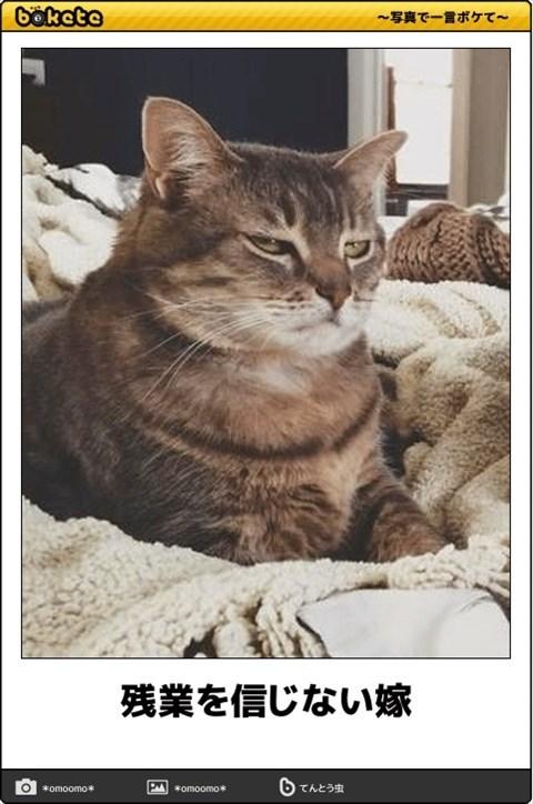 猫の写真・画像で一言ボケて!14