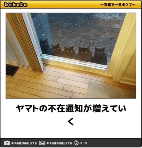 猫の写真・画像で一言ボケて!9