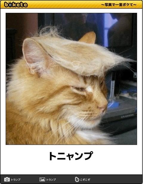 猫の写真・画像で一言ボケて!10