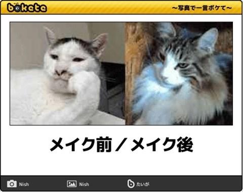 猫の写真・画像で一言ボケて!13