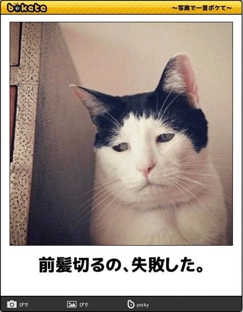 猫の写真・画像で一言ボケて!15