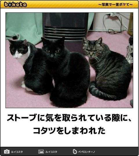 猫の写真・画像で一言ボケて!18