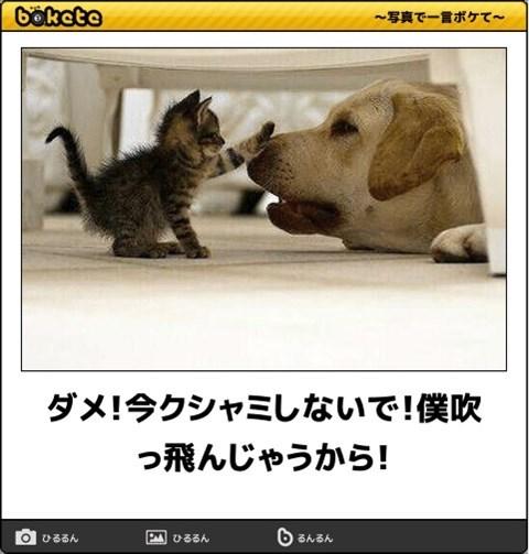 猫の写真・画像で一言ボケて!21