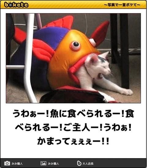 猫の写真・画像で一言ボケて!16