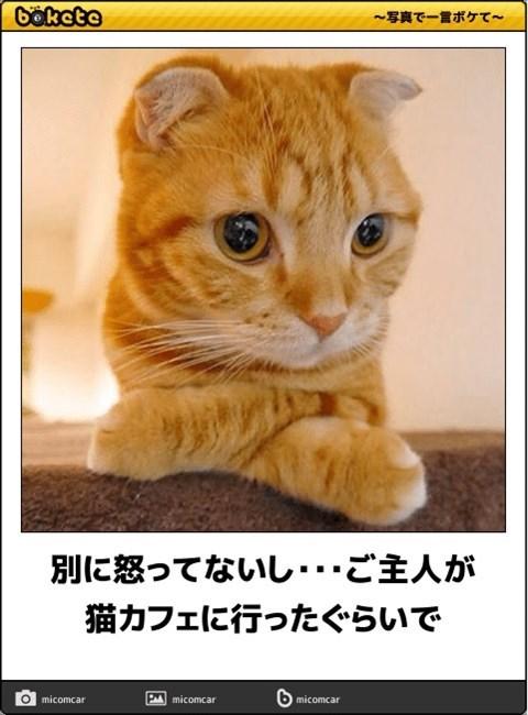 猫の写真・画像で一言ボケて!17