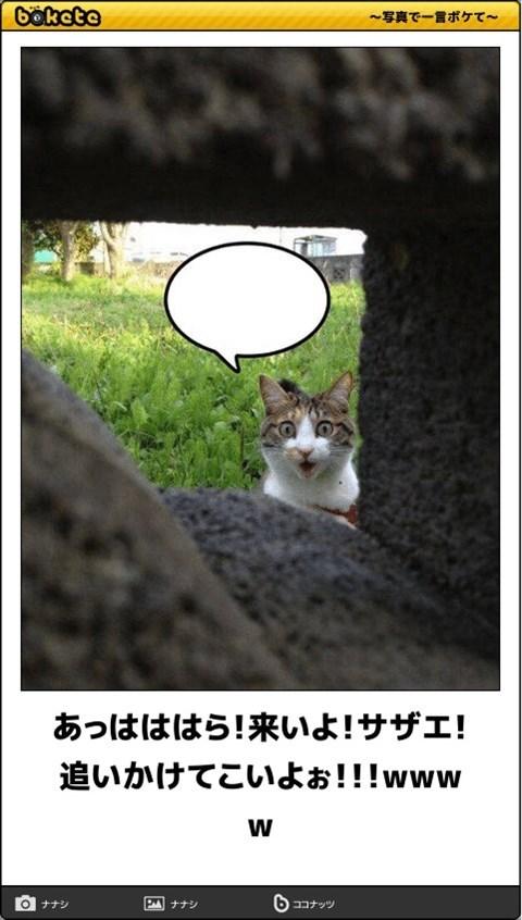 猫の写真・画像で一言ボケて!19