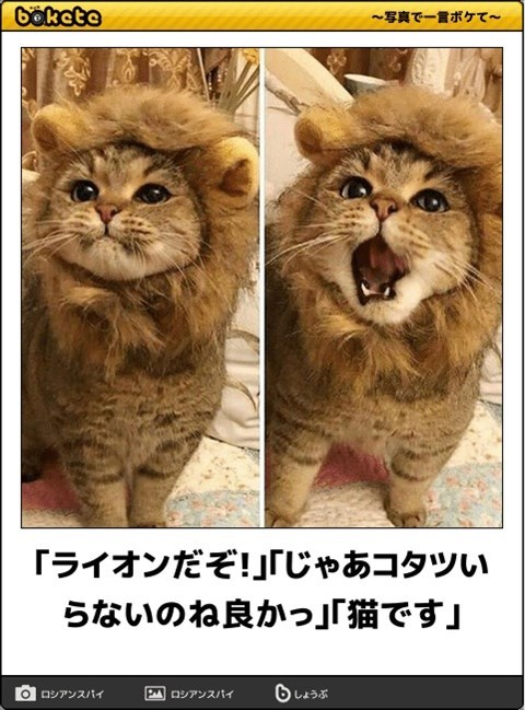 猫の写真・画像で一言ボケて!20