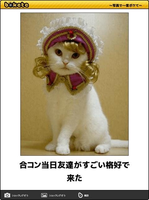 猫の写真・画像で一言ボケて!3