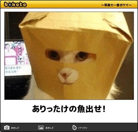 猫の写真・画像で一言ボケて!11