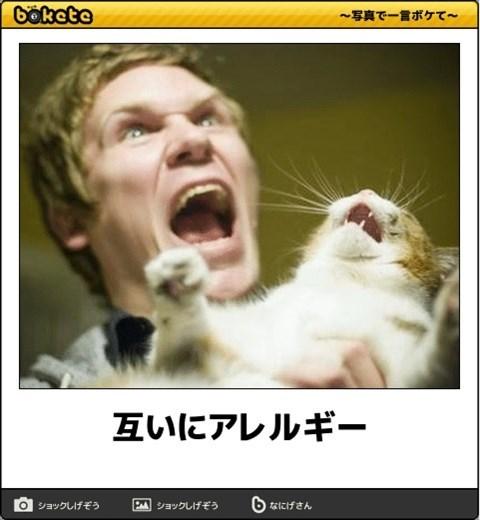 猫の写真・画像で一言ボケて!6