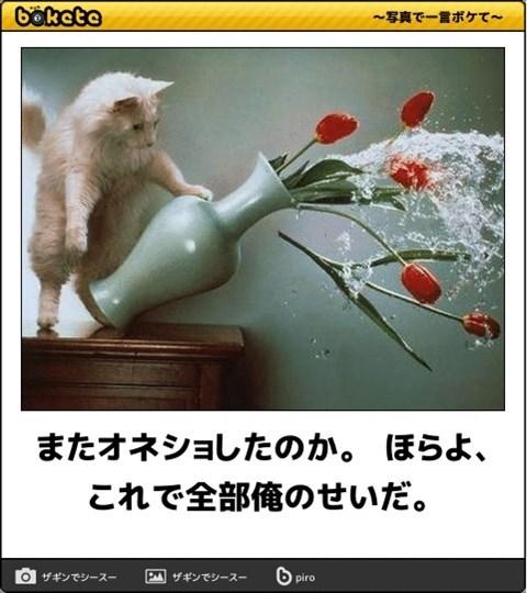 猫の写真・画像で一言ボケて!4