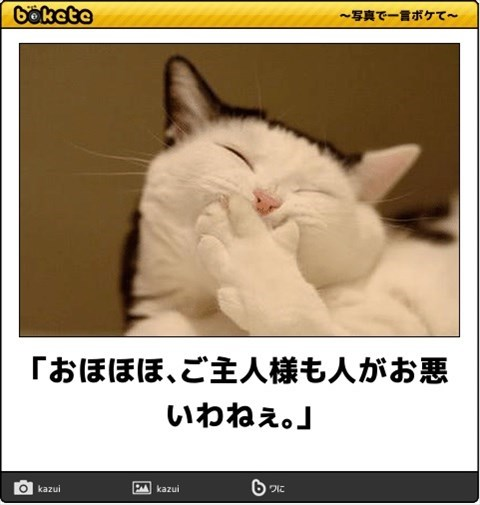 猫の写真・画像で一言ボケて!5