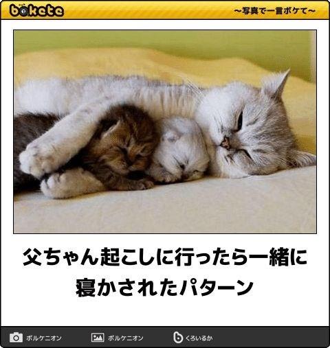 猫の写真・画像で一言ボケて!7