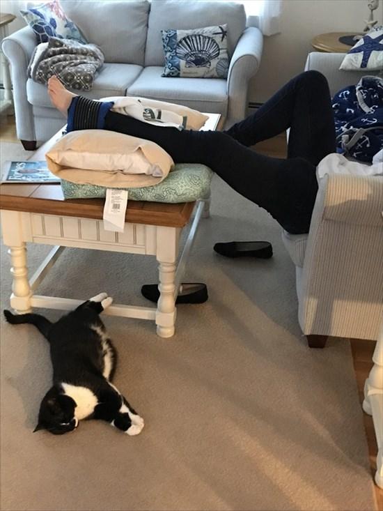 足首を捻挫した飼い主に付き合う猫2