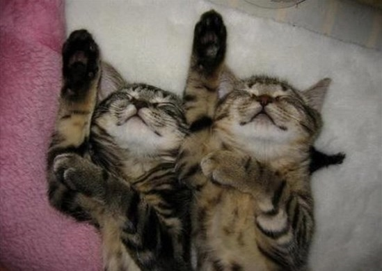偶然にもシンクロした猫の写真1