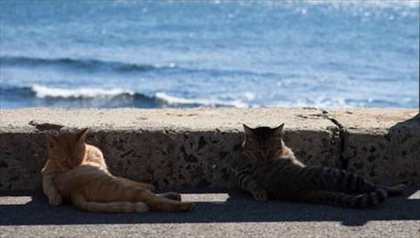 偶然にもシンクロした猫の写真14