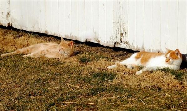 偶然にもシンクロした猫の写真10