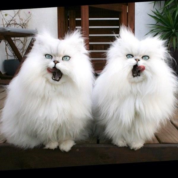 偶然にもシンクロした猫の写真12