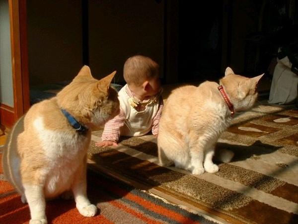 偶然にもシンクロした猫の写真20
