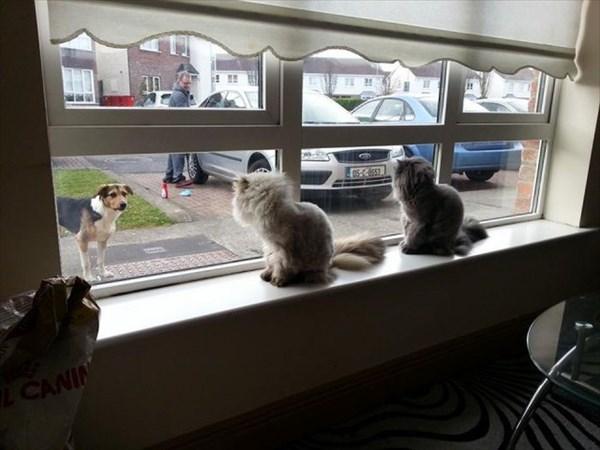 偶然にもシンクロした猫の写真19