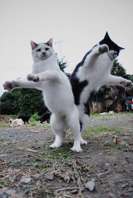 偶然にもシンクロした猫の写真5
