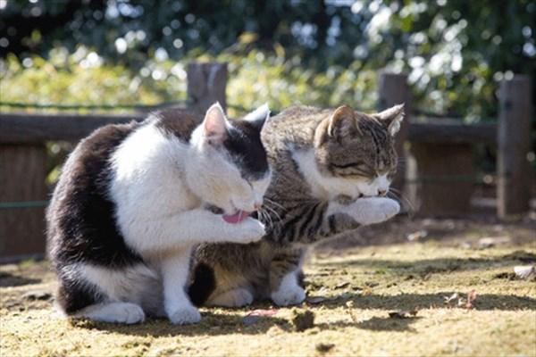 偶然にもシンクロした猫の写真4