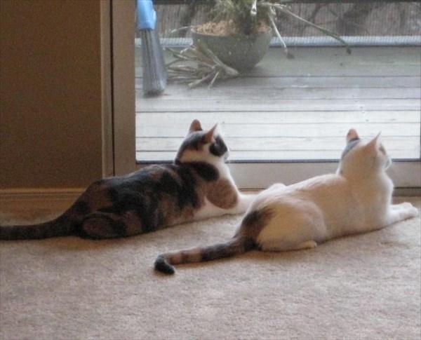 偶然にもシンクロした猫の写真6