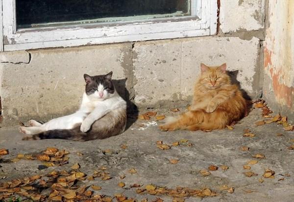 偶然にもシンクロした猫の写真8