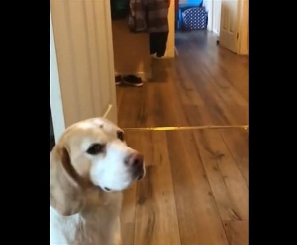 犬のように取って来い遊びをする猫 5