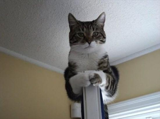 上から目線な猫 画像2