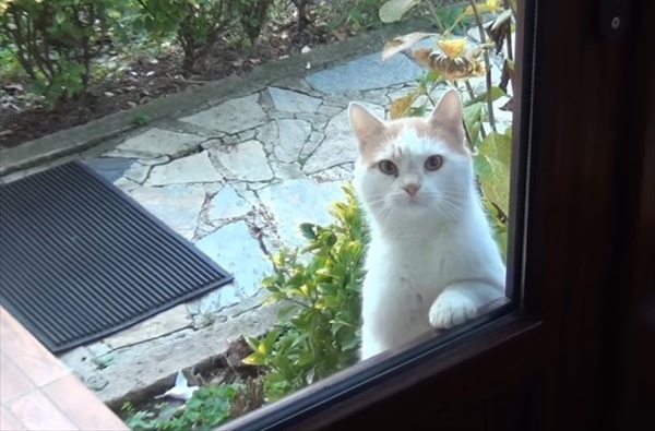 ご飯が欲しいと無言の圧力をかける猫1