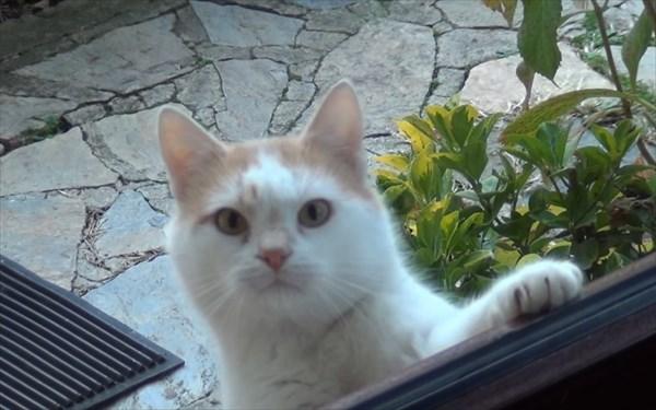 ご飯が欲しいと無言の圧力をかける猫3