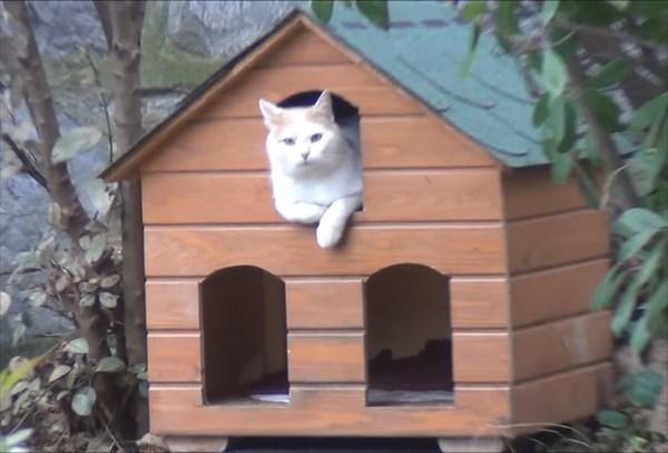 ご飯が欲しいと無言の圧力をかける猫4