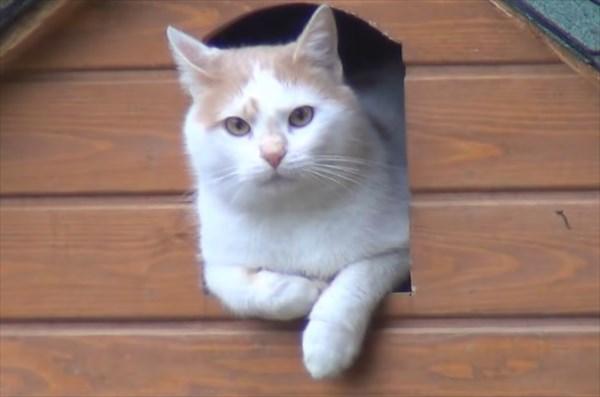 ご飯が欲しいと無言の圧力をかける猫5