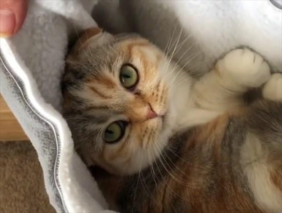 ポケットにすっぽりはまりご満悦な猫さん1