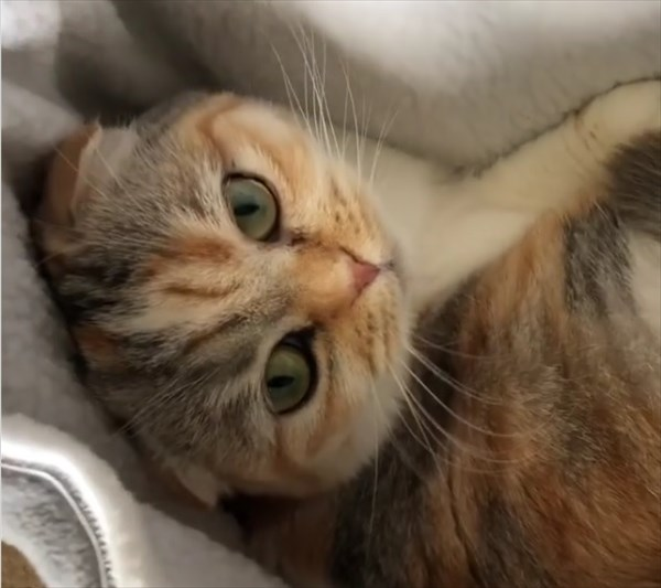 ポケットにすっぽりはまりご満悦な猫さん2