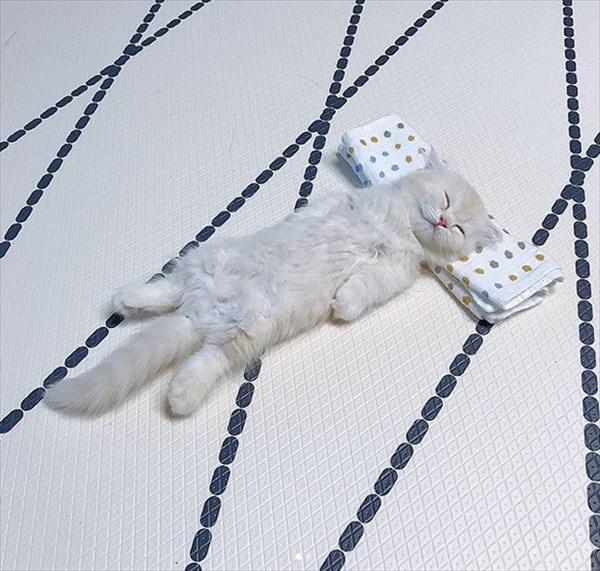寝ている子猫と寝込みを襲う子猫が最高に可愛い3