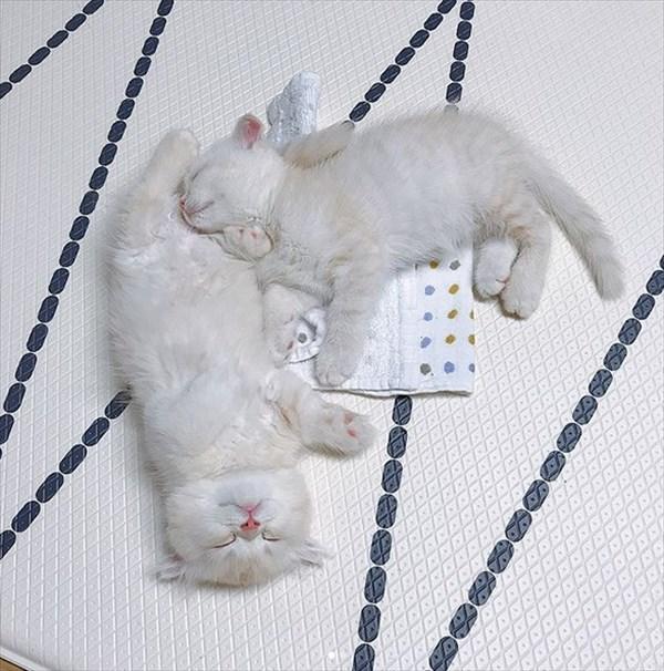 寝ている子猫と寝込みを襲う子猫が最高に可愛い4