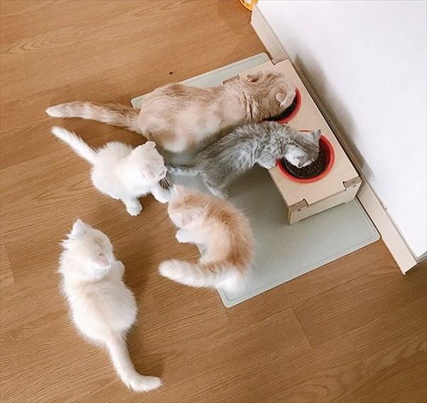 寝ている子猫と寝込みを襲う子猫が最高に可愛い5
