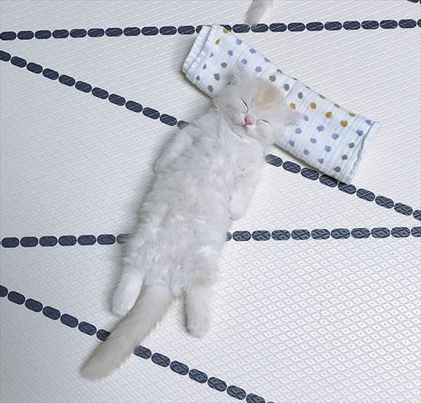 寝ている子猫と寝込みを襲う子猫が最高に可愛い2