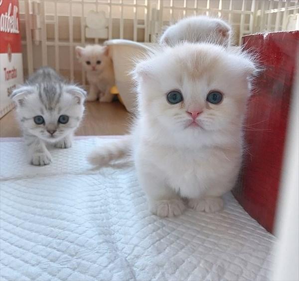 寝ている子猫と寝込みを襲う子猫が最高に可愛い9