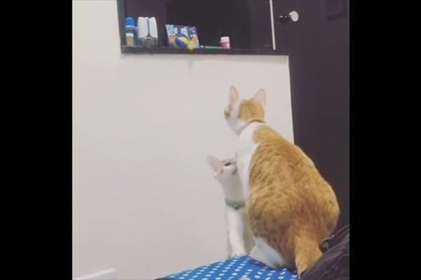 弟の為にオモチャを取ってあげる優しい姉猫3