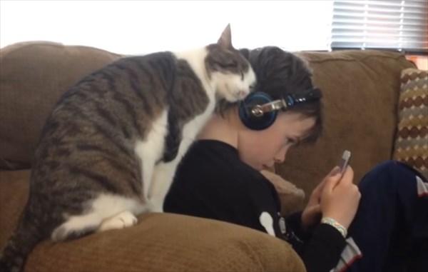 スリスリ攻撃が激しい猫 1