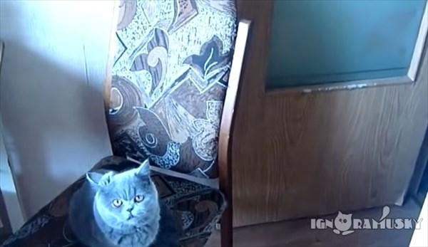 お願いしたらドアを閉める賢い猫 1