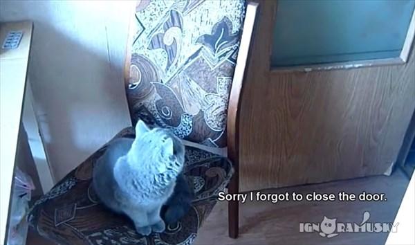お願いしたらドアを閉める賢い猫 2