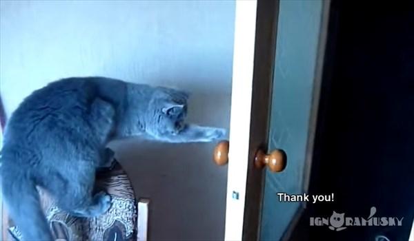 お願いしたらドアを閉める賢い猫 4