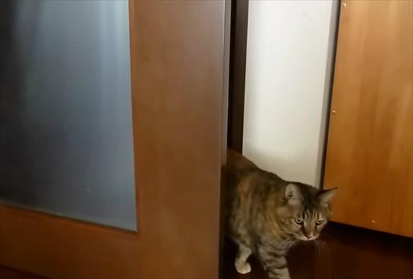ドアを開けたら閉める猫 1