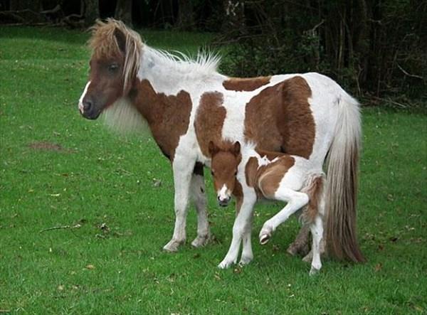 癒やされるような動物の親子画像10